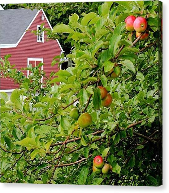 Apple Tree Canvas Print - #nofilter #landscape #beautiful by Essy Dias