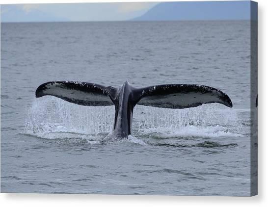 Noncarnival Whale Tail Canvas Print