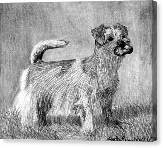 Norfolk Terrier Dog Portrait Canvas Print by Olde Time  Mercantile