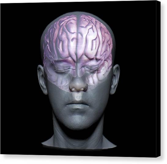 Normal Brain Canvas Print by Zephyr