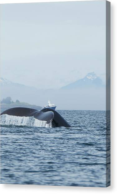 Acrobatic Canvas Print - North America, Usa, Alaska by Joe and Mary Ann Mcdonald