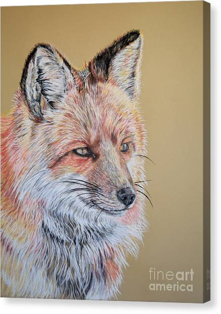 North American Red Fox Canvas Print by Ann Marie Chaffin