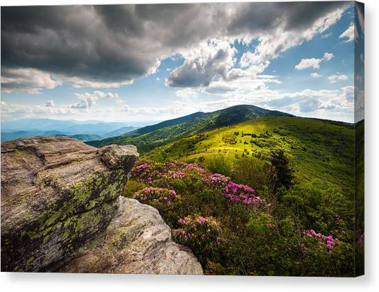 North Carolina Blue Ridge Mountains Roan Rhododendron Flowers Nc Canvas Print