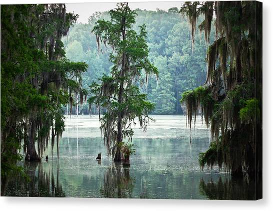 Swamps Canvas Print - North Florida Cypress Swamp by Rich Leighton