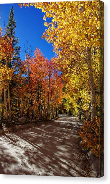 Bishops Canvas Print - North Lake Road Fall Colors by Scott McGuire