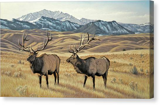 Bulls Canvas Print - North Of Yellowstone by Paul Krapf