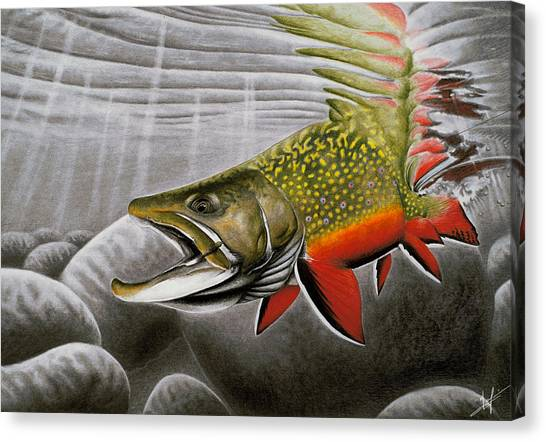 Trout Canvas Print - Northern Exposure by Nick Laferriere