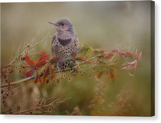 Northern Flicker Canvas Print - Northern Flicker In Fall Colors by Susan Capuano