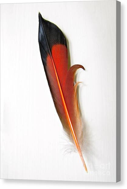 Northern Flicker Tail Feather Canvas Print