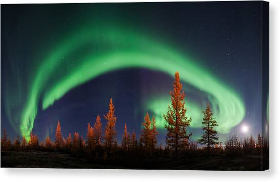 Russia Canvas Print - Northern Lights by Andrey Snegirev
