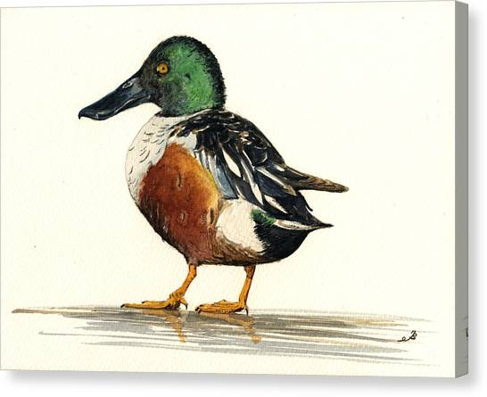 Ducks Canvas Print - Northern Shoveler by Juan  Bosco