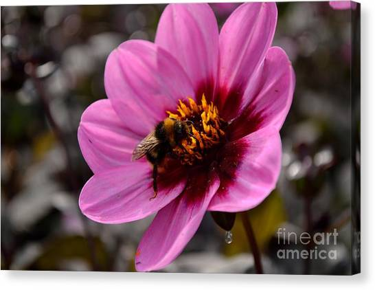 Canvas Print featuring the photograph Nosy Bumble Bee by Scott Lyons