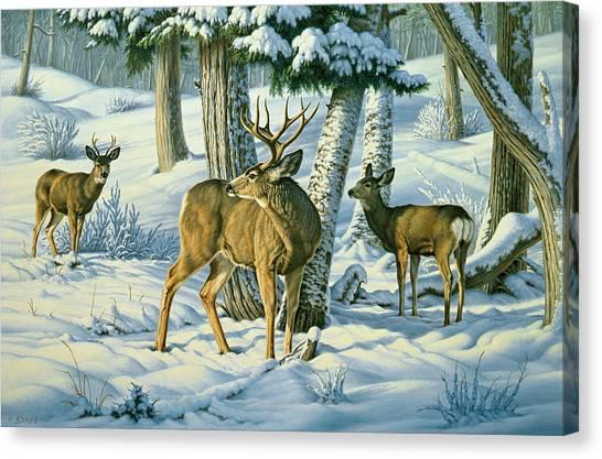Mule Deer Canvas Print - Not This Year - Mule Deer by Paul Krapf