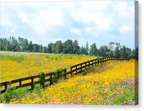 Notch In The Fence Wild Flowers Canvas Print