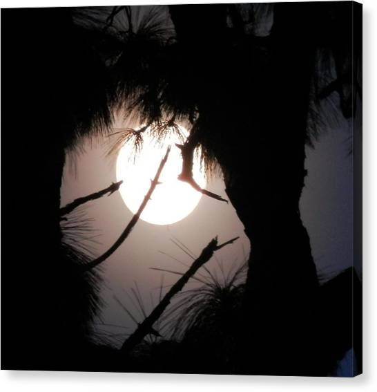 Florida November Full Moon Canvas Print