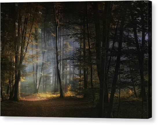 Autumn Leaves Canvas Print - November Morning by Norbert Maier