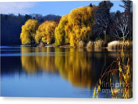 Autumn Weeping Willows Canvas Print