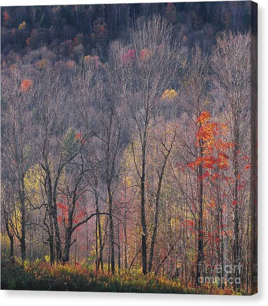 November Woods Canvas Print