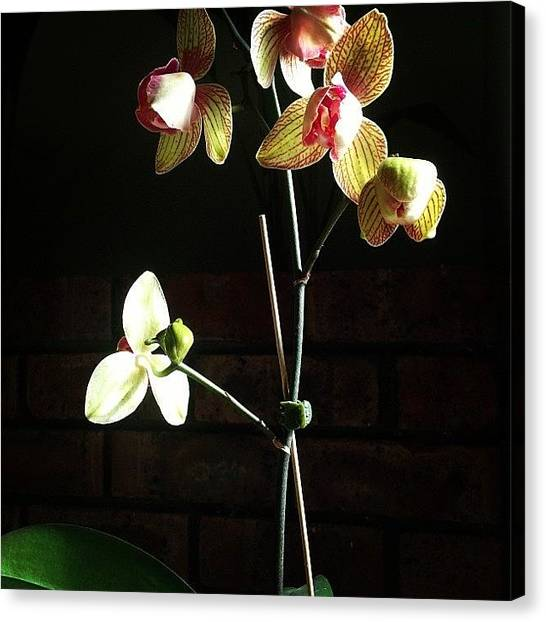 Orchids Canvas Print - Number 5 Is Alive!!! Cannot Believe by Lisa Barrett