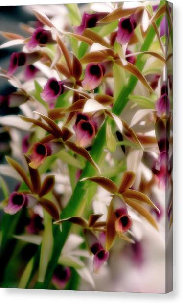 Nuns Canvas Print - Nun's Orchid (phaius Tankervilliae) by Maria Mosolova/science Photo Library