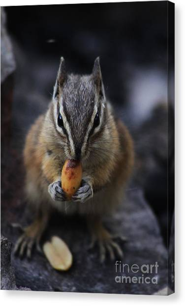 Nuts Canvas Print