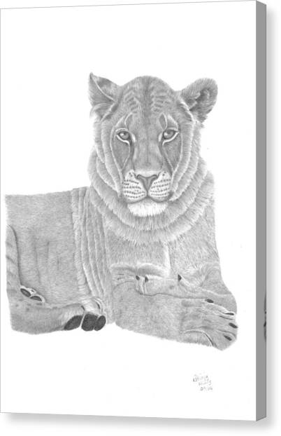 Nyah The Lioness Canvas Print