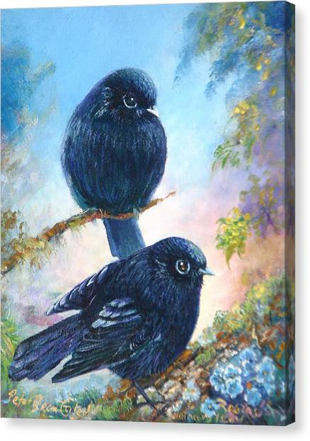 Nz Black Robins Canvas Print by Peter Jean Caley