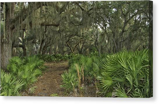 Oak Hammock. Split Oak Forest. Canvas Print