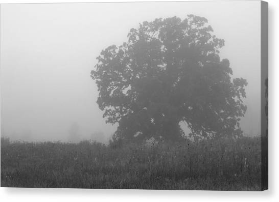 Oak In The Fog Canvas Print