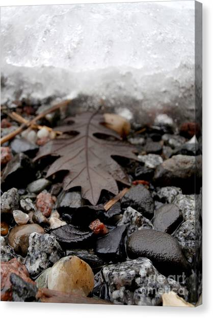 Oak Leaf On A Winter's Day Canvas Print by Steven Valkenberg