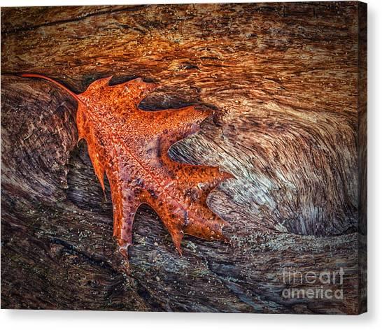 Oak Leaf Canvas Print by Todd Bielby