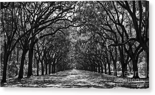 Oak Lined Lane Canvas Print