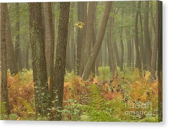 Oak Openings Fog Forest Canvas Print