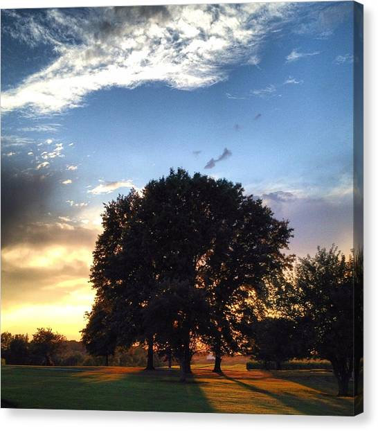 Oak Tree At The Magic Hour Canvas Print