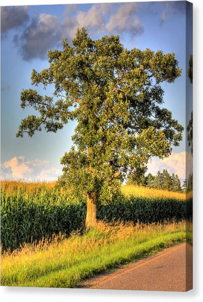 Oak Tree By The Roadside Canvas Print