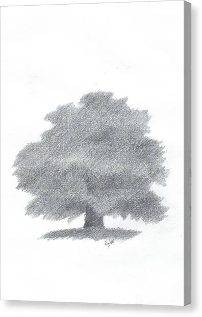 Oak Tree Drawing Number Five Canvas Print by Alan Daysh