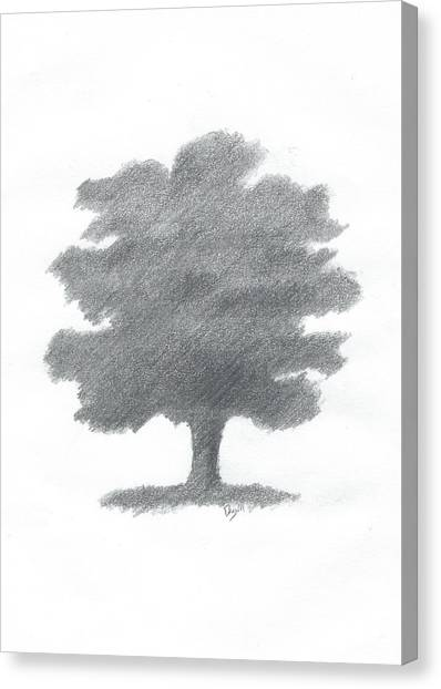 Oak Tree Drawing Number Seven Canvas Print by Alan Daysh