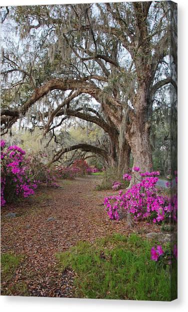 Oak Trees And Azaleas Canvas Print