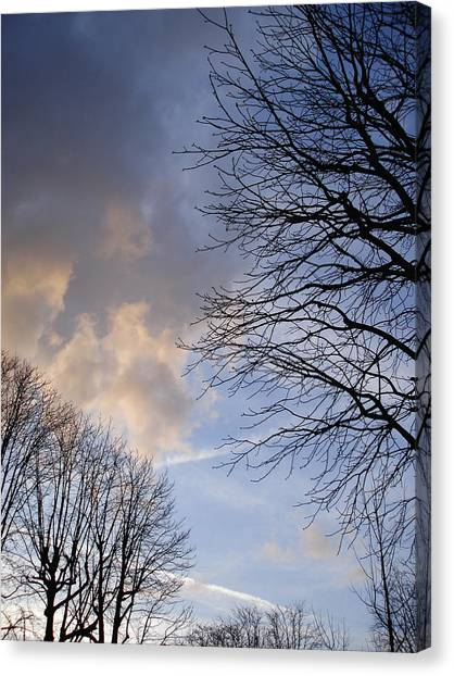 Oak Trees Composition Canvas Print by Michel Mata