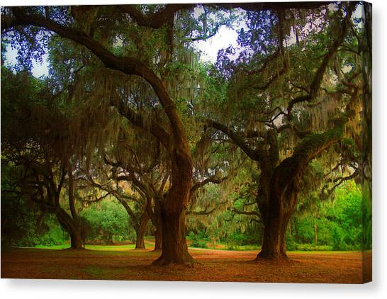 South Carolina Canvas Print - Oaks At Tabby Ruins by Tony Delsignore