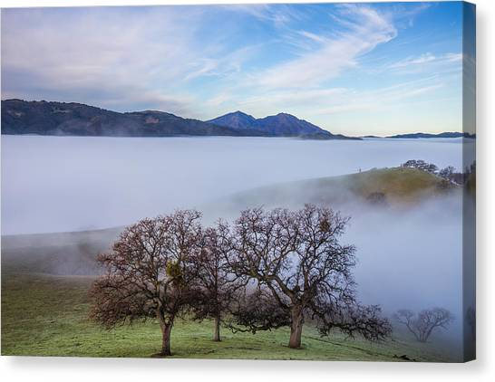 Oaks On A Hill And Mt. Diablo Canvas Print