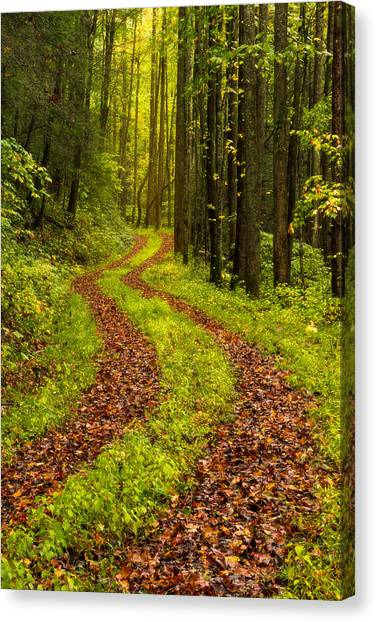 Forest Paths Canvas Print - Obscured by Chad Dutson