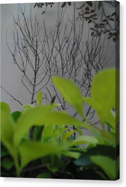 Observateur Canvas Print by Beto Machado