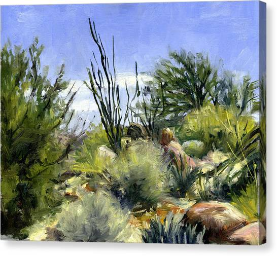 Ocotillo And Scrub Brush Canvas Print by Stacy Vosberg