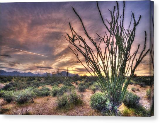 Ocotillo Sunset Canvas Print