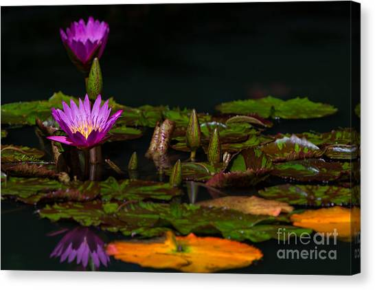 October Lilies 2 Canvas Print