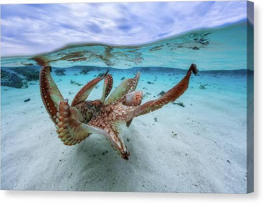 Underwater Canvas Print - Octopus by Barathieu Gabriel
