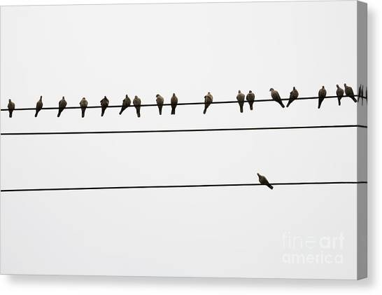 Odd Man Out Canvas Print