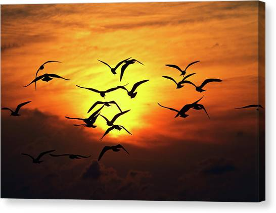 Ode To Birds Canvas Print