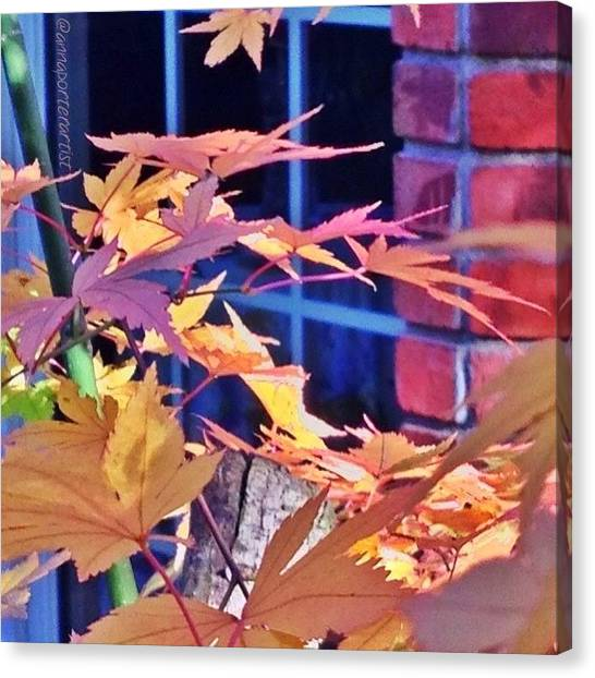 Sunny Canvas Print - Of Maples And Bricks by Anna Porter